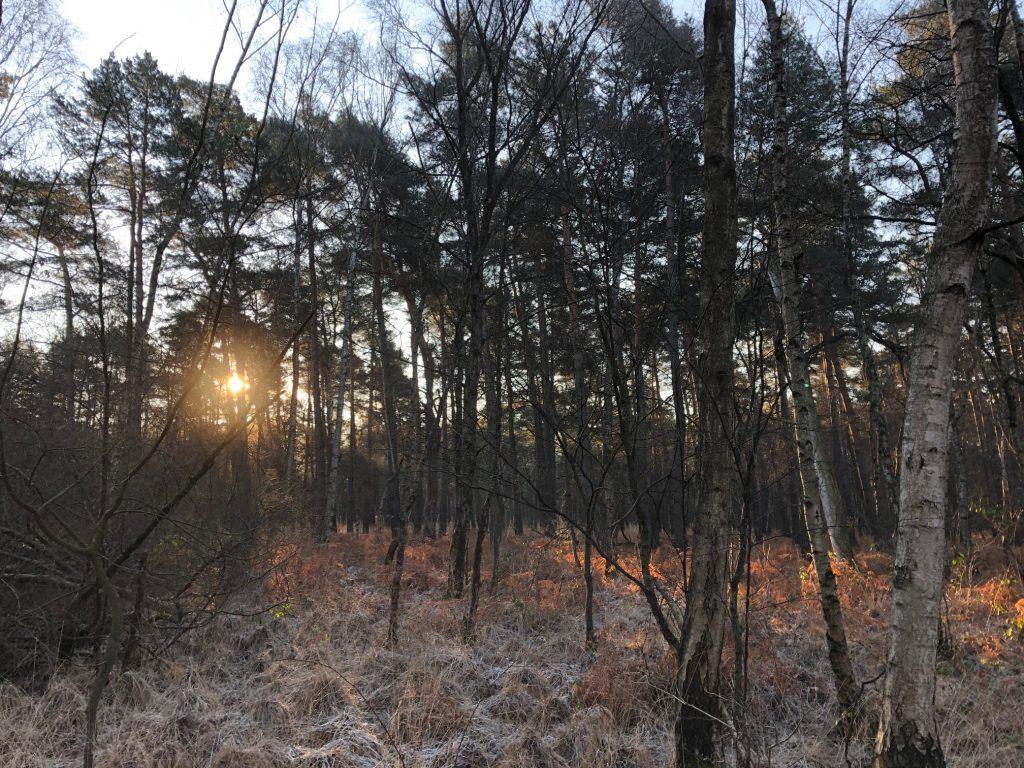 Laufstrecke wunderschön im Wald