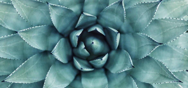 Aloe Vera Naturkosmetik